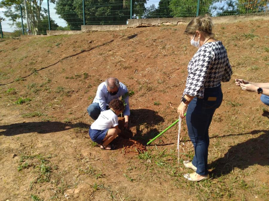 Mudas de árvores são plantadas em escolas municipais de Fernandópolis