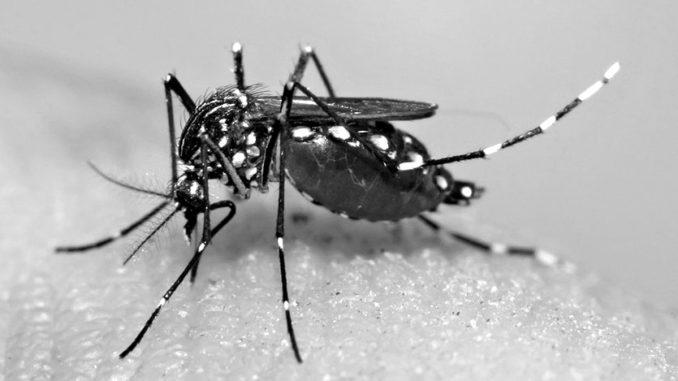 Secretaria de Saúde de Ouroeste promoveu ação mobilização contra o Aedes Aegypti