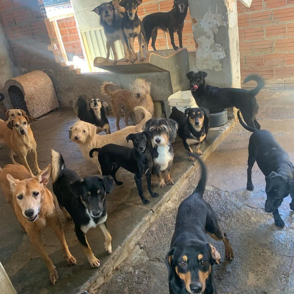 Mais de 50 cachorros ficam sem lar após donos morrerem de Covid-19