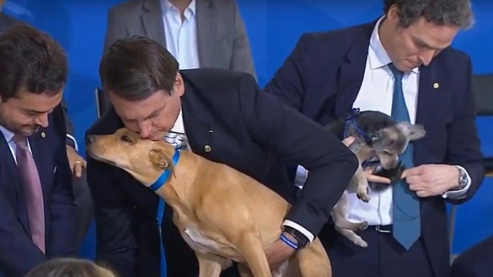 Bolsonaro sanciona lei com pena maior, de até cinco anos, para maus-tratos contra cães ou gatos