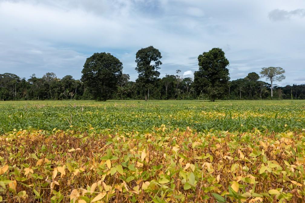 Produtores rurais terão mais recursos para se proteger das alterações do clima