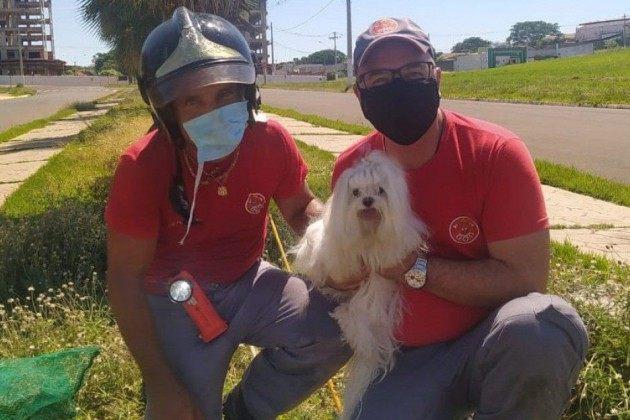 Bombeiros resgatam cachorrinha que caiu em bueiro em Fernandópolis