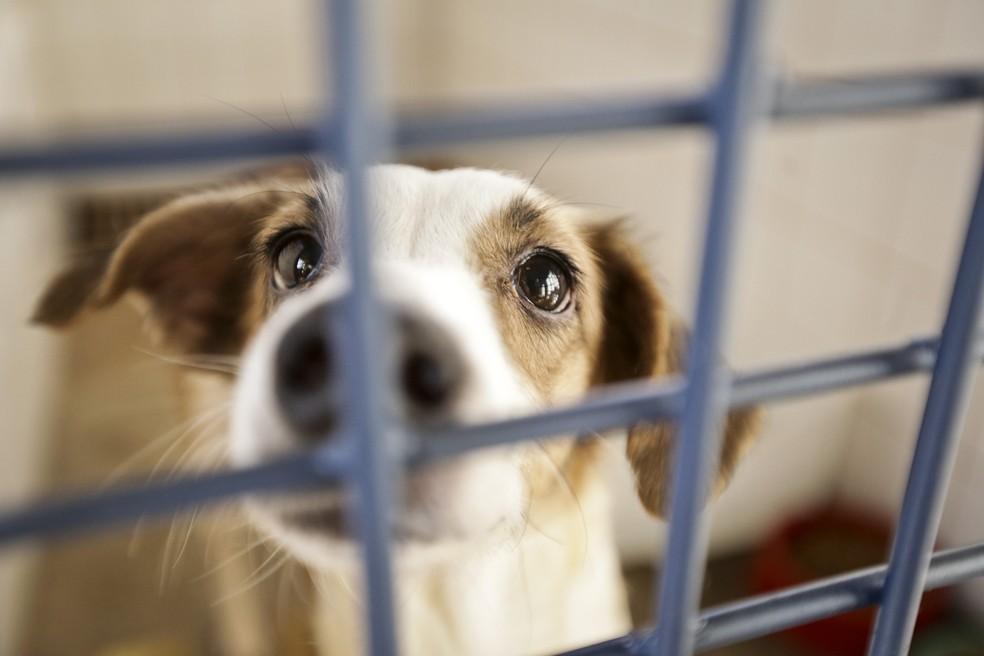Mais de 100 animais estão disponíveis para adoção em Votuporanga