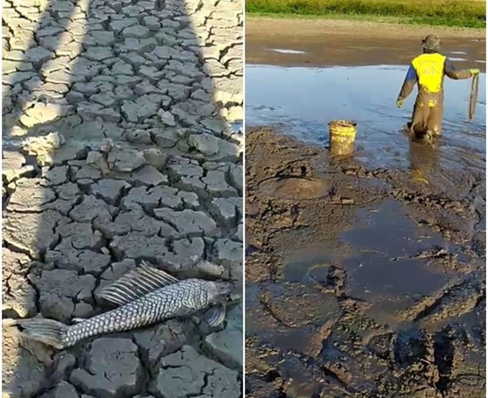 Moradores se unem para salvar peixes após lagoa secar na região